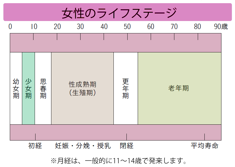 女性のライフステージ。月経は、一般的に11~14歳で発来します