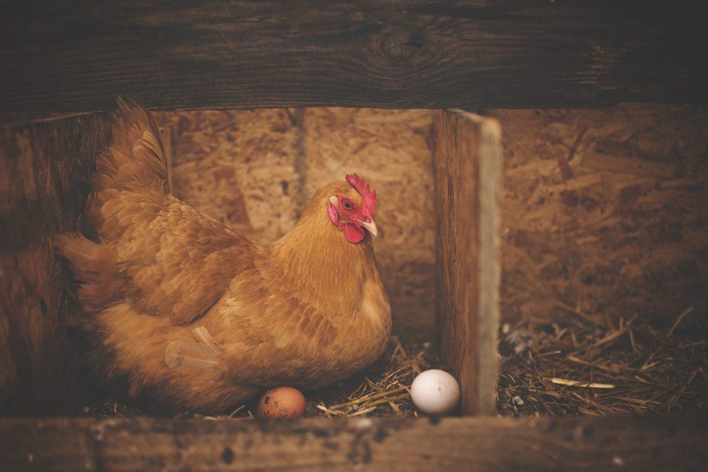 ニワトリと卵