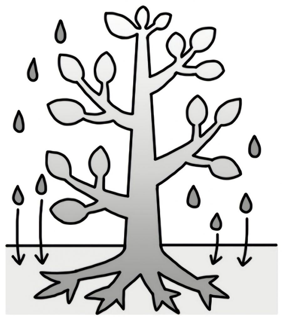 上には水が染み込んでいかない木の図
