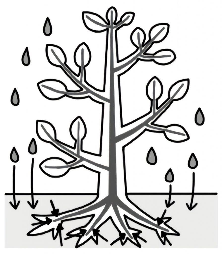 通り道を使って全体に水が行き渡っている木の図