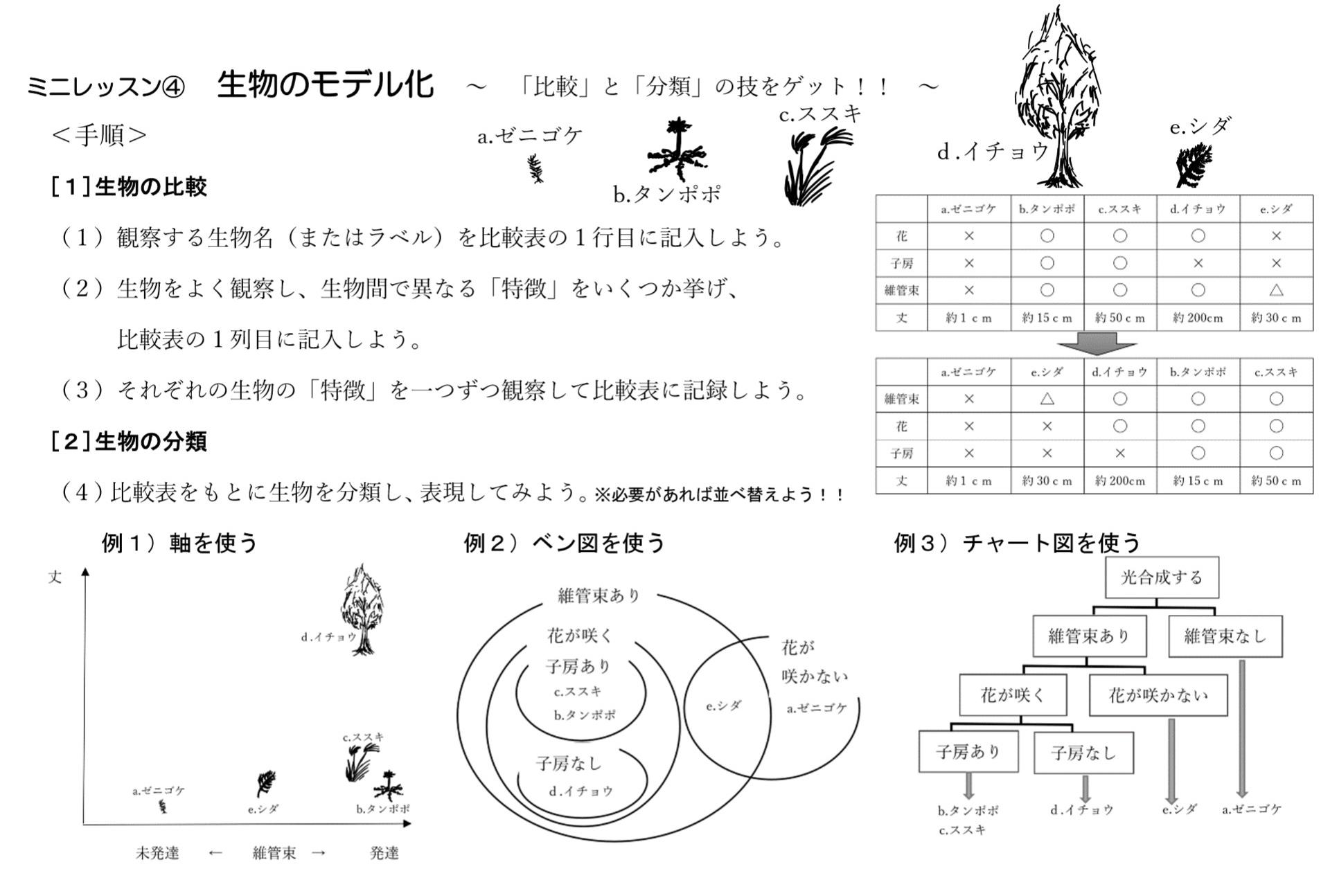 ミニレッスン 生物のモデル化