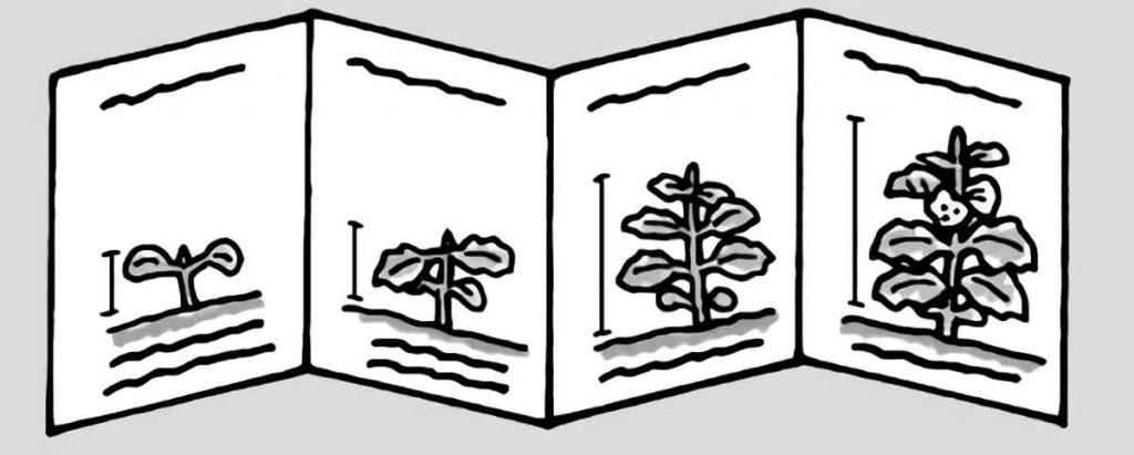 植物の観察記録