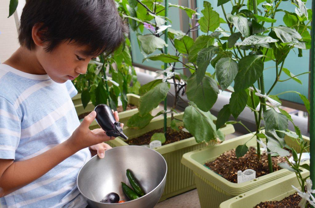 収穫した野菜を観察する男の子