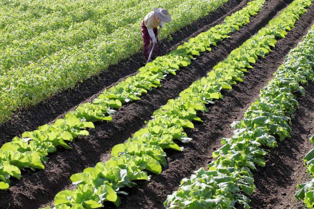 小3社会「農家の仕事」指導アイデア