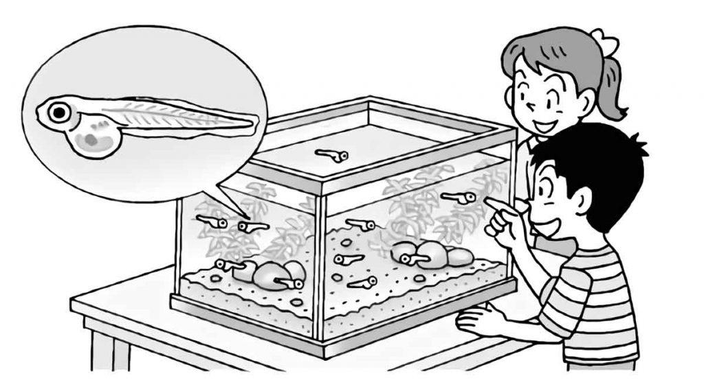 メダカの水槽を観察する様子