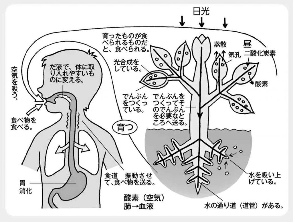 生物が生きていくために必要な仕組み図解