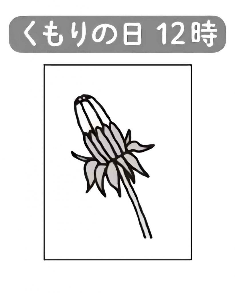 くもりの日のタンポポの花の様子