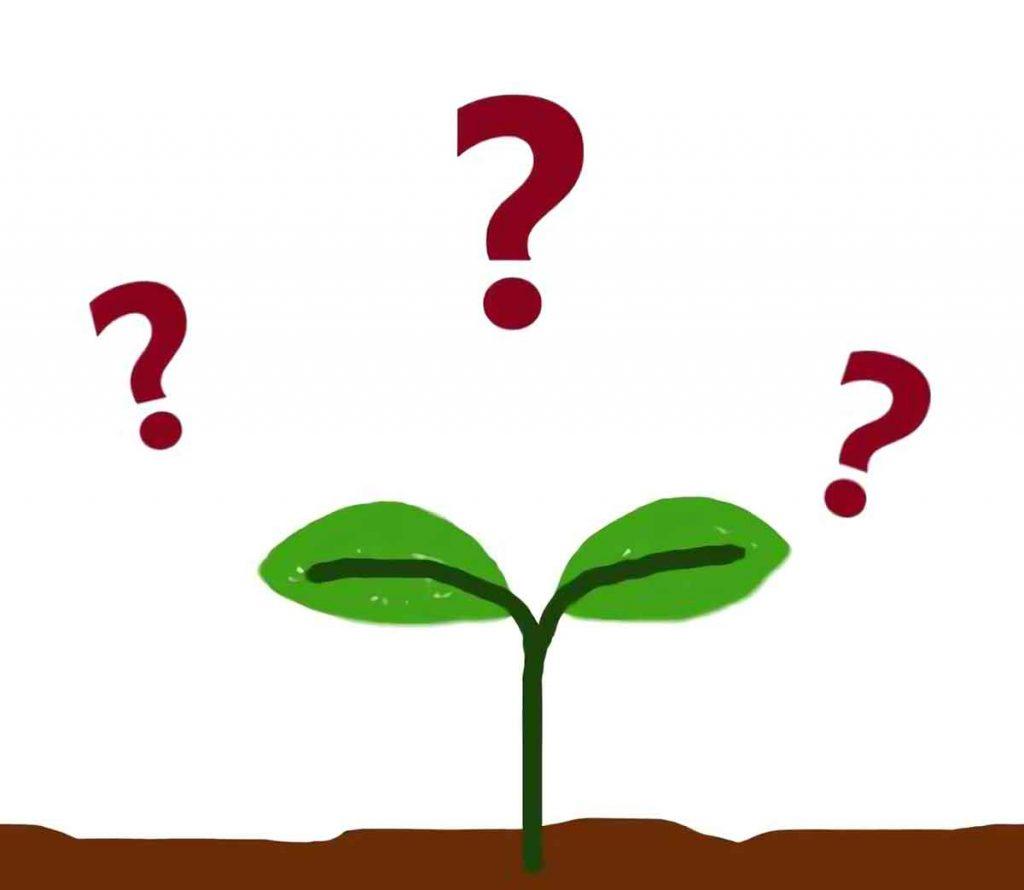 小5理科「植物の発芽、成長、結実①」指導アイデア