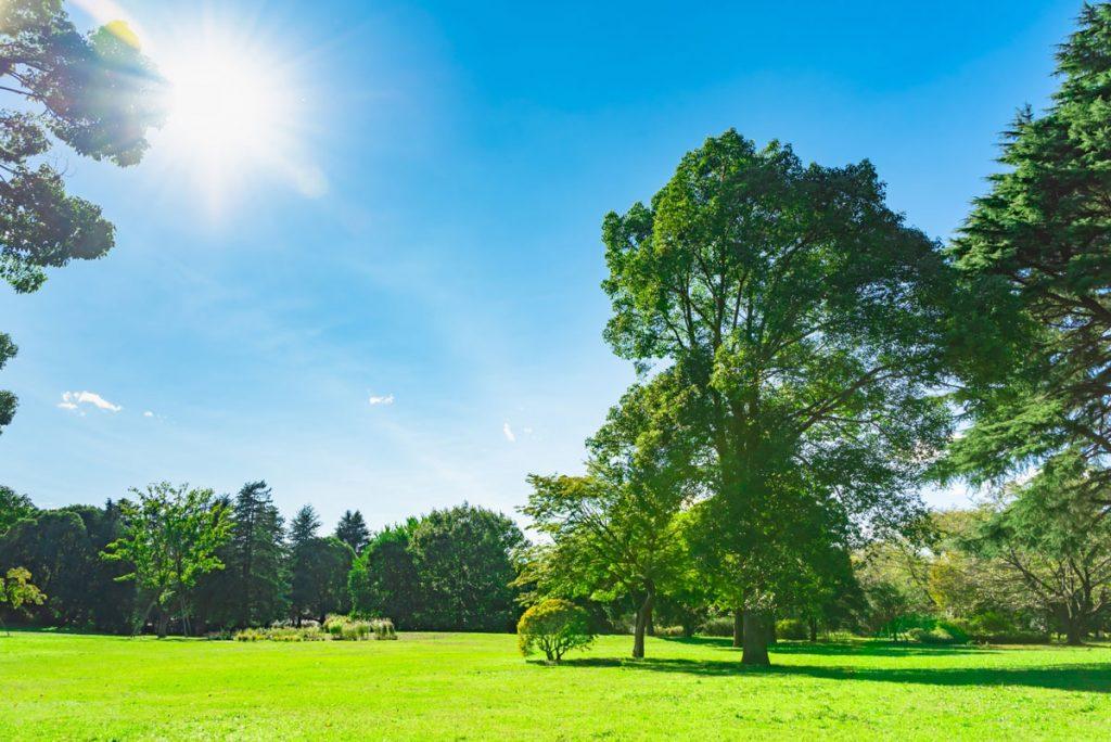 小5社会「わたしたちの生活と森林」指導アイデア