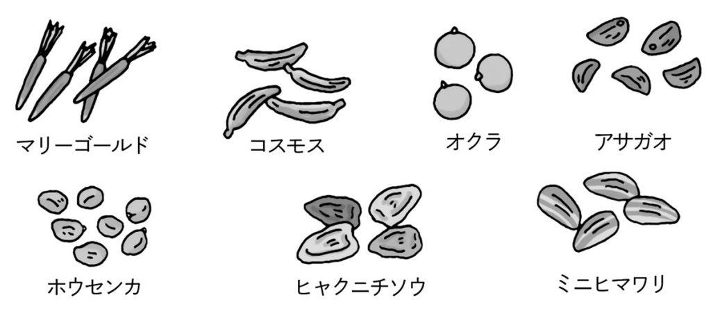 さまざまな種類の種子