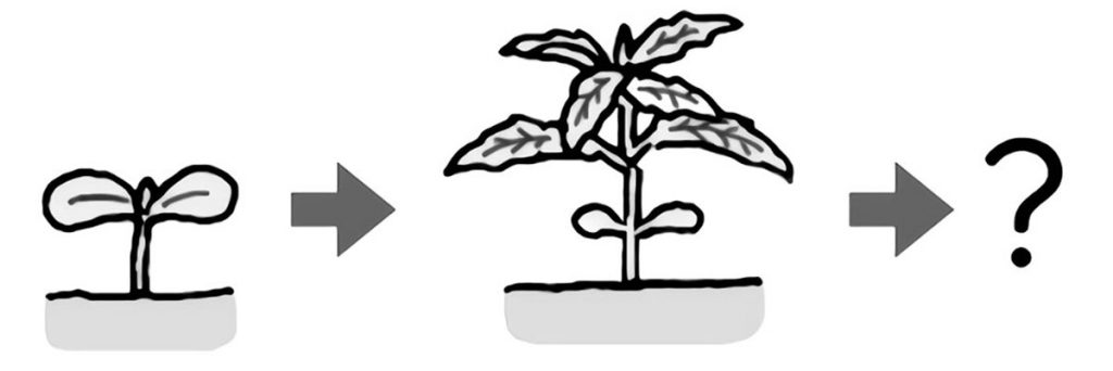 植物が成長する姿を予想する
