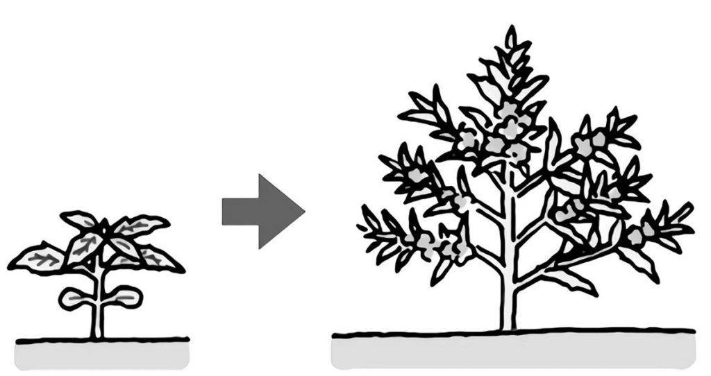 葉や茎の形、どのくらいまで成長するか予想する
