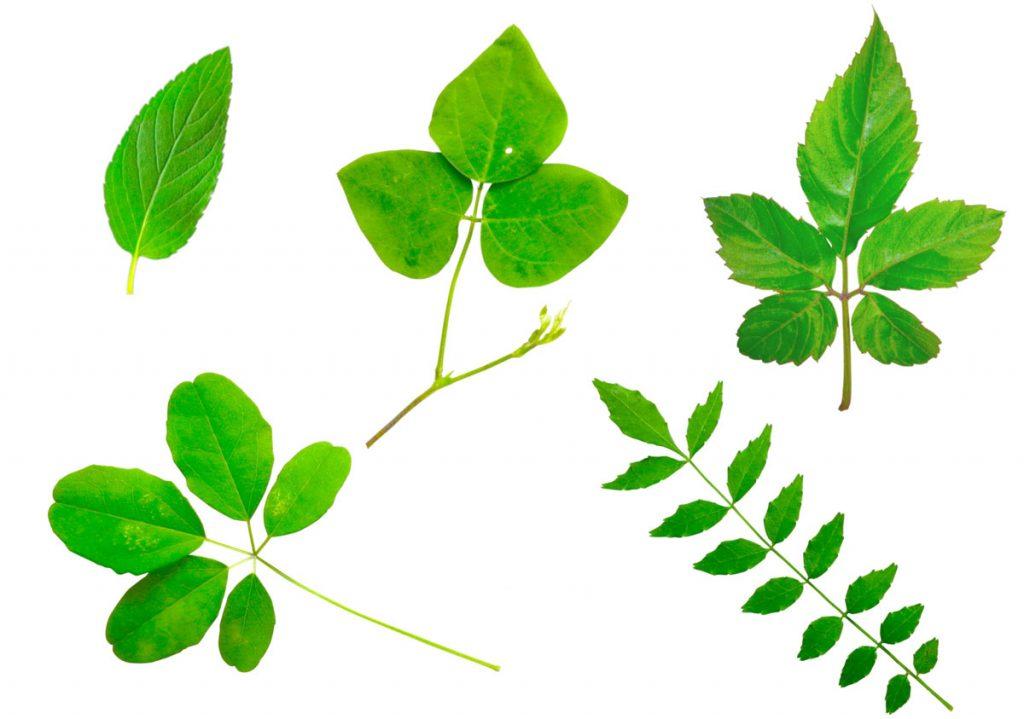 小3理科「植物を調べよう」指導アイデア