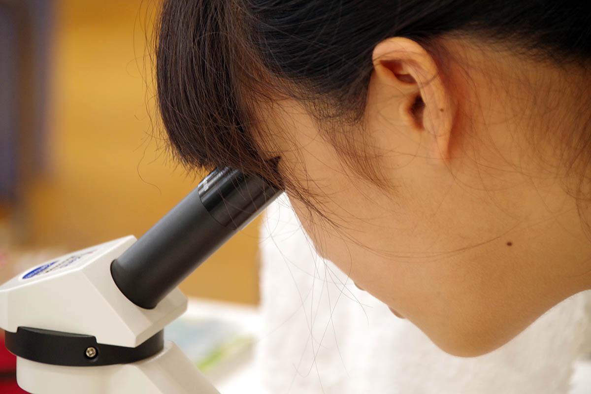 顕微鏡を覗く女子児童