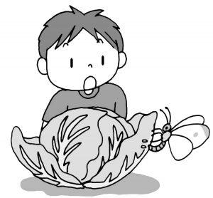 キャベツの苗を植えておく