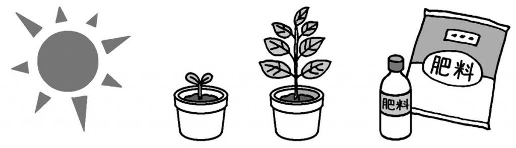 植物の成長の条件を調べる
