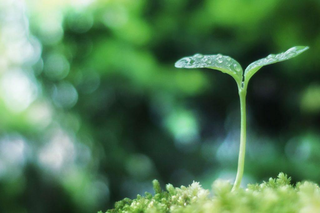 小5理科「植物の発芽と成長」指導アイデア
