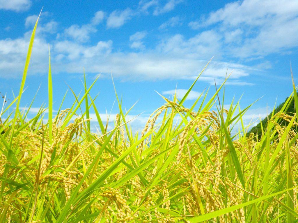 小5社会「稲作の盛んな地域」指導アイデア