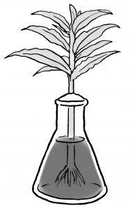 植物に色水を吸わせる実験