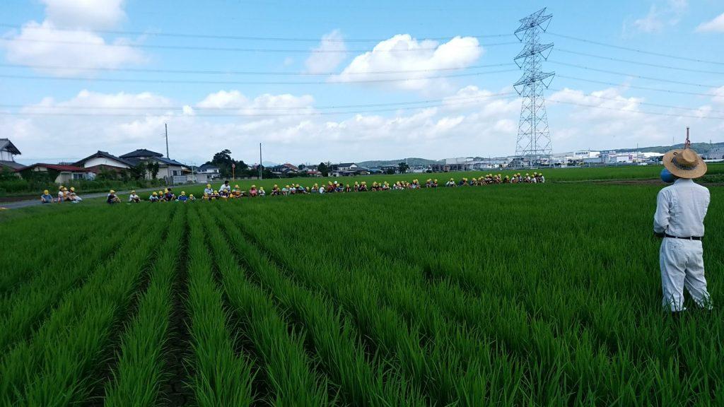小学校の近くにある田んぼで、農家の方に指導いただきながら、田植えから稲刈りまでを経験。(当時4年生)