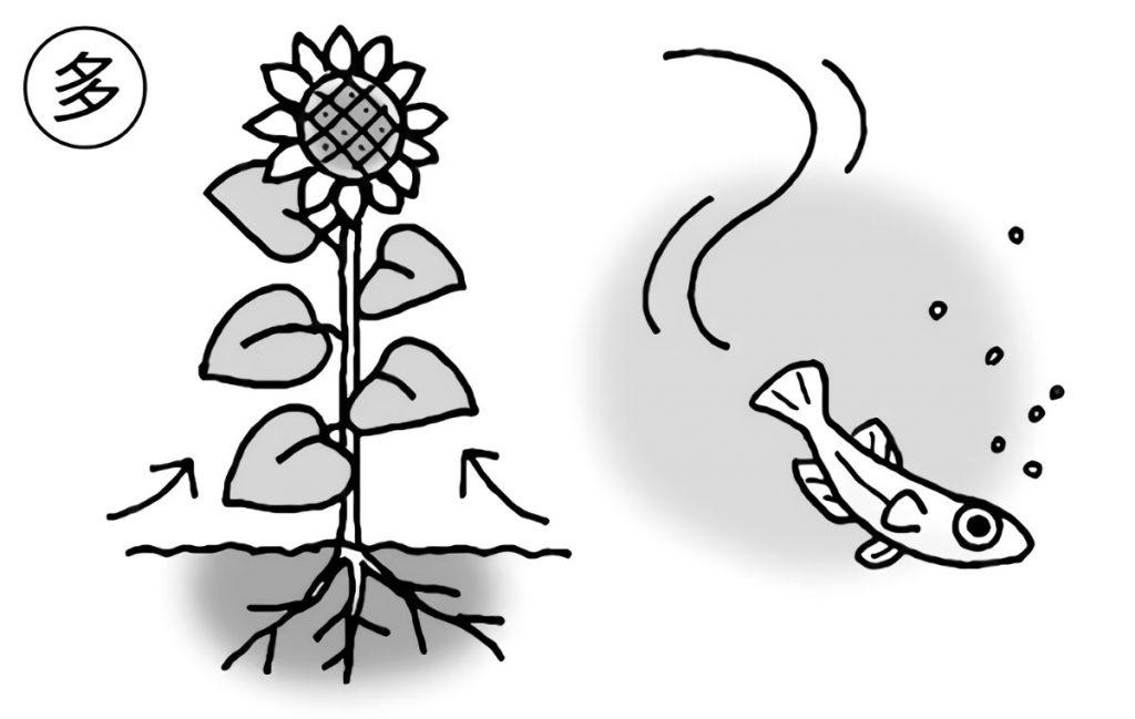 植物とメダカの多様性