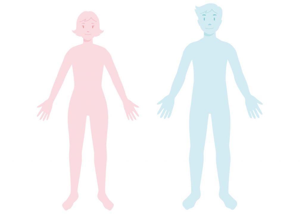 小6理科「体のつくりとはたらき」指導アイデア