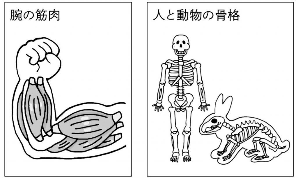 動物の体のつくりと動き方