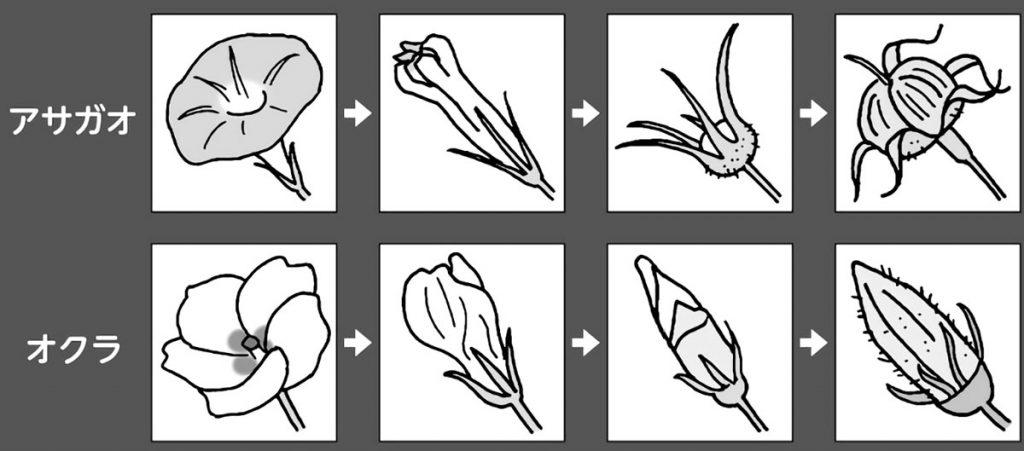 開花から結実までの写真資料
