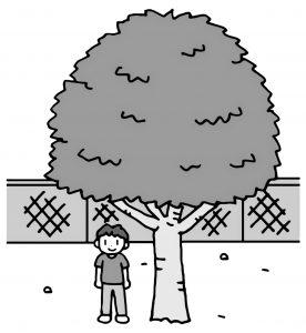 夏の木の様子